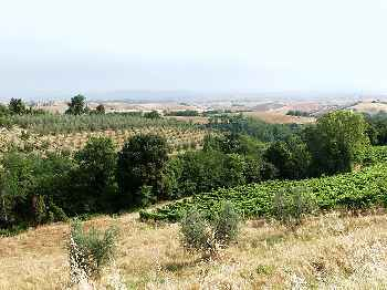 Montaione (Apt. 126271)