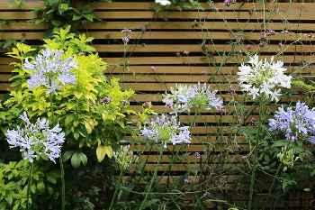 Stylish 1 BR on Shoreditch w/ Private Garden