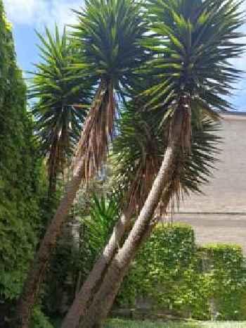 La casa del jardín en Santander